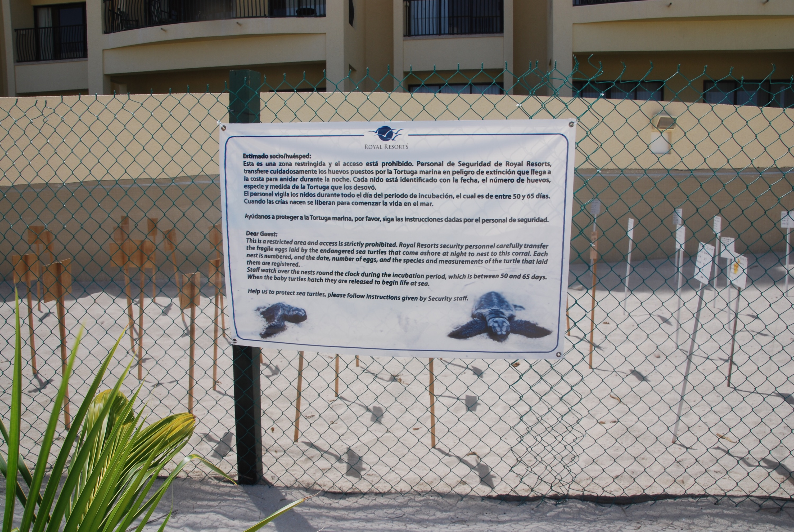 A safe corral for the sea turtle eggs collected along the white sand beach in Cancun Mexico at the Royal Sands Resort. Photo copyright www.PieLadyLife.com
